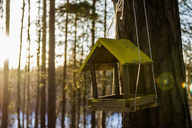 Feeder cottage sun, nature landscapes.