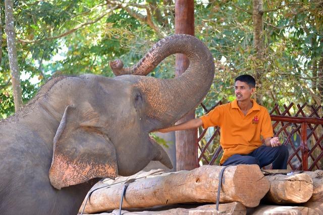 Feeding elephant elephant jumbo, emotions.