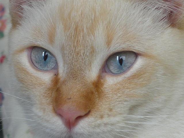Feline cat animals, animals.