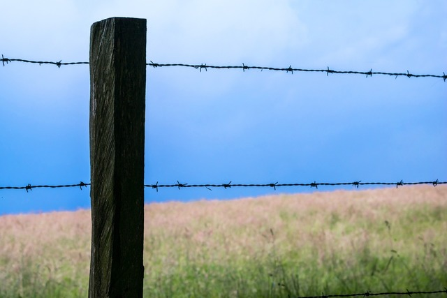 Fence barbed wire pasture.