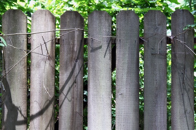 Fence fencing bamboo, nature landscapes.