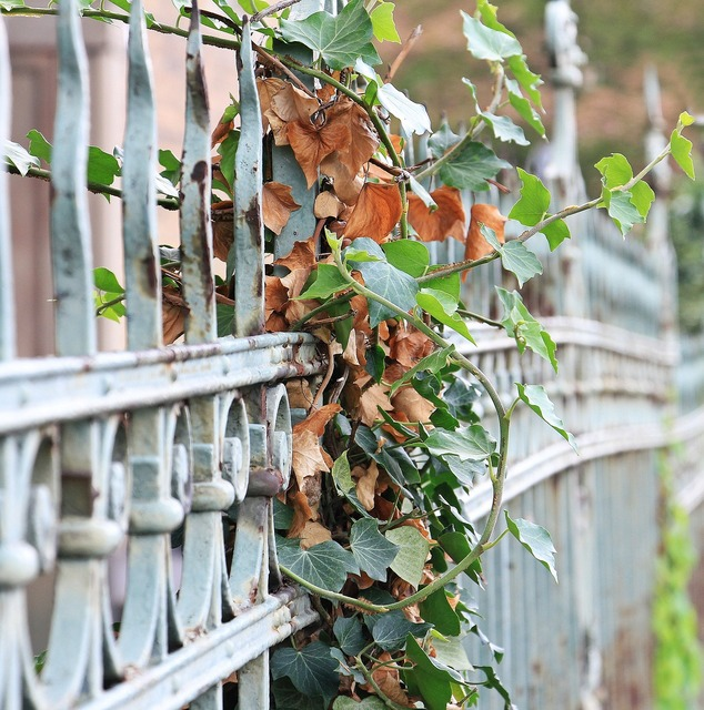 Fence ivy iron, nature landscapes.