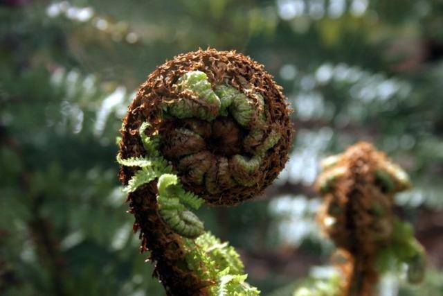 Fern frond plant, nature landscapes.