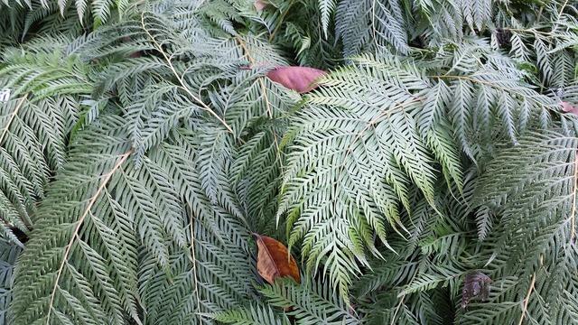 Fern green leaf, nature landscapes.