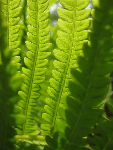 Fern green leaves.