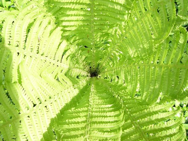Fern green plant, nature landscapes.