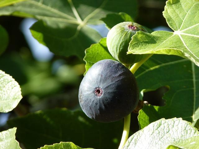 Fig close fruit, food drink.