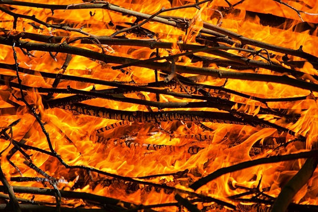 Fire flames campfire.