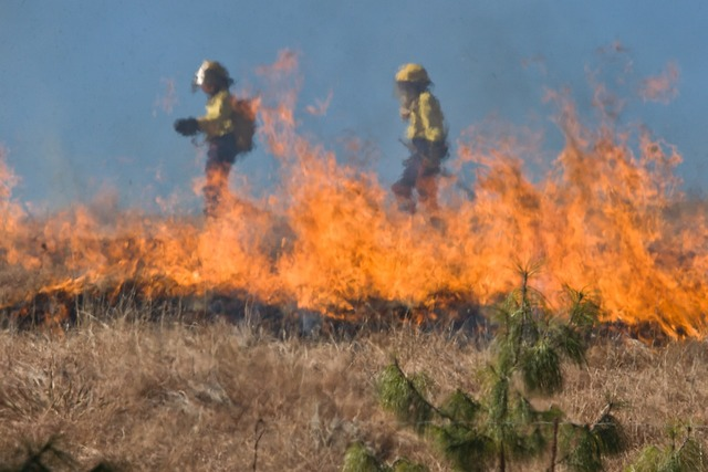 Firefighter wildfire grass fire.