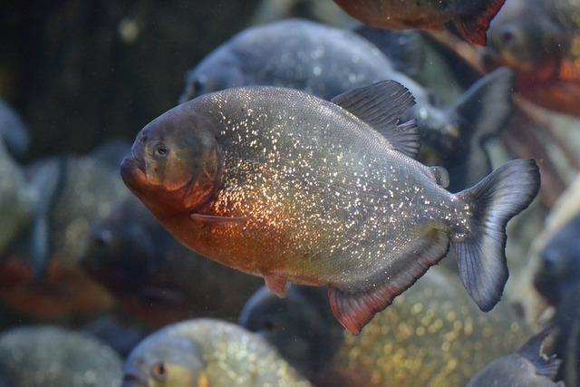 Fish dangerous underwater.