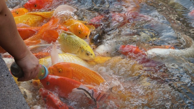 Fish hands river.