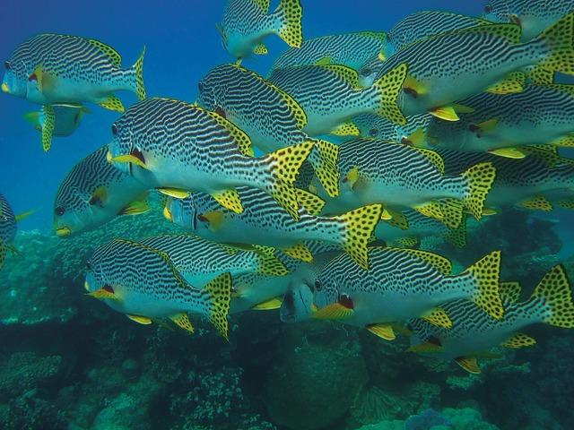 Fish swarm fish underwater.