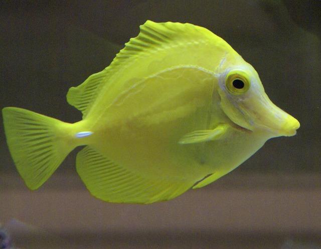 Fish yellow aquarium.