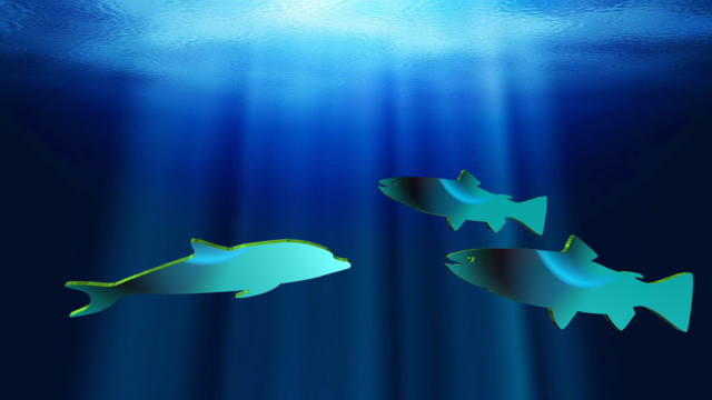 Fishes dolphin aquatic, travel vacation.