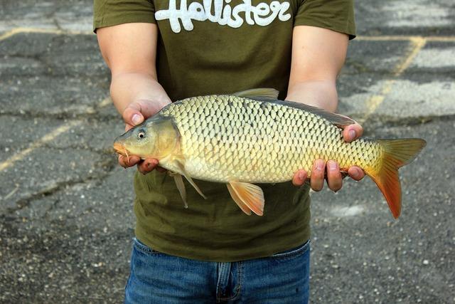 Fishing catch holding.