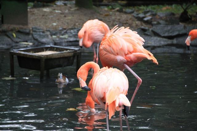 Flament pink birds park.