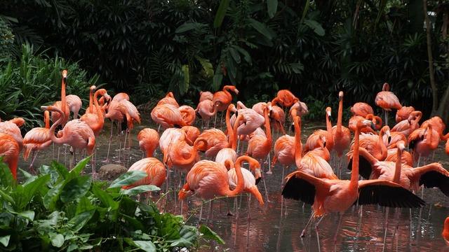 Flamingo park birds.