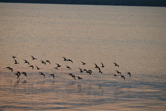Flock birds lake.