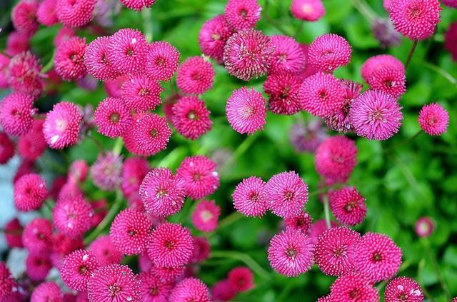 Floral plants natural.