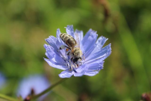 Flower bee pollination, animals.