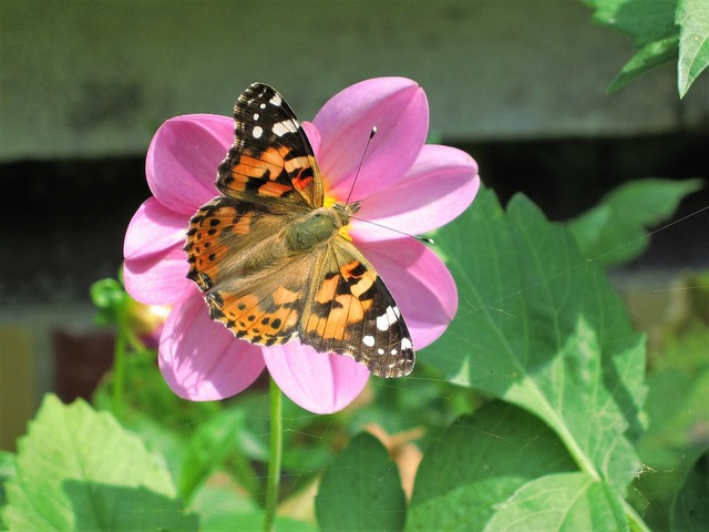 Flower butterfly nature, nature landscapes.