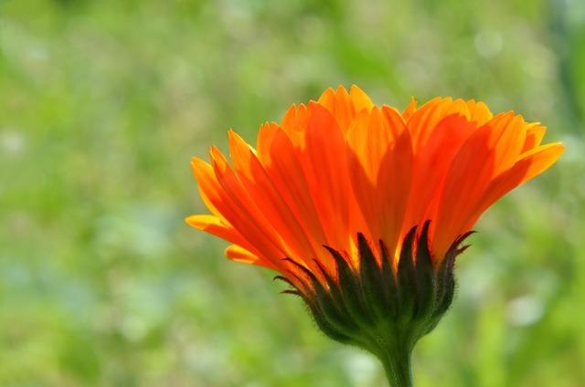 Flower color orange flora.