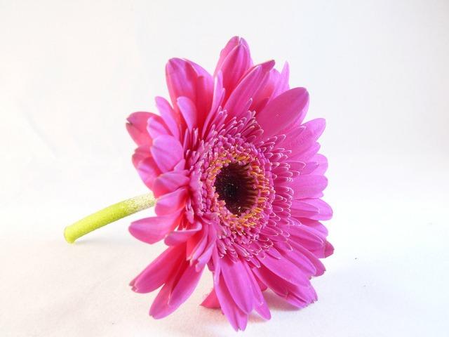 Flower flora macro.