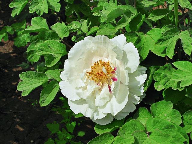 Flower green leaf white flower.