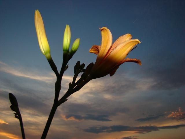 Flower light cloud.
