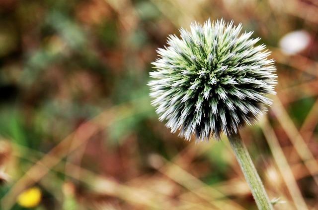 Flower nature macro, nature landscapes.