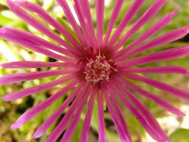 Flower nature plant, nature landscapes.