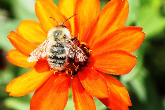 Flower orange flower nature, nature landscapes.