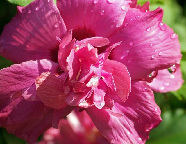 Flower pink floral.