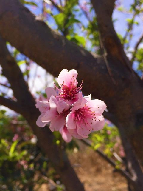 Flower pink nature, nature landscapes.