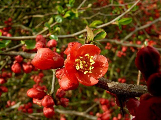 Flower red flora, nature landscapes.