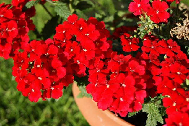 Flower red nature, nature landscapes.