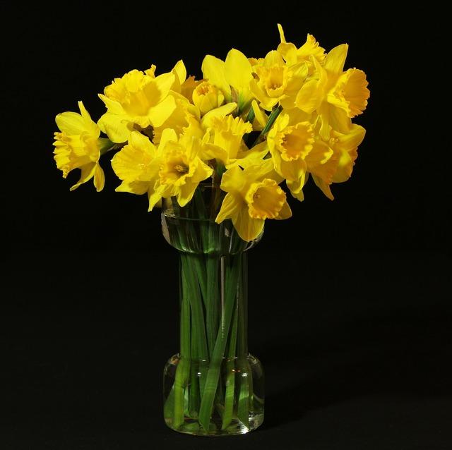 Flower vase daffodils jonquil.