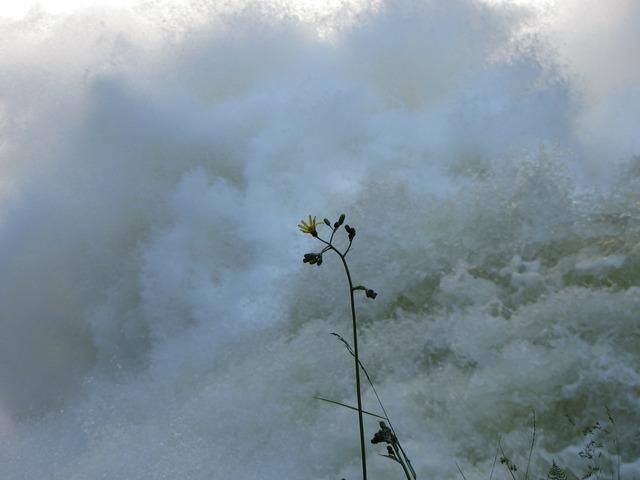 Flower water power, science technology.