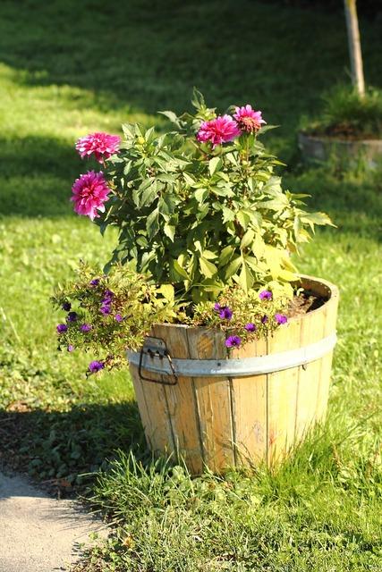 Flowerpot flowers plant, nature landscapes.