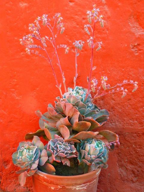 Flowerpot plant decoration, nature landscapes.