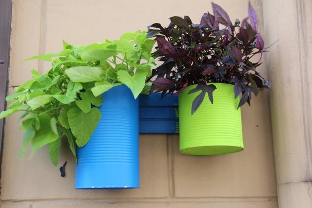 Flowerpot plant green, nature landscapes.
