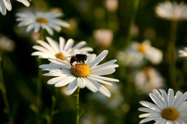 Flowers bee plants.