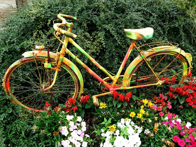 Flowers bicycle flower bed, sports.