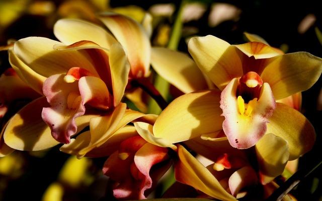 Flowers blooms petals.