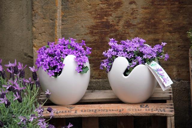 Flowers box plant, nature landscapes.