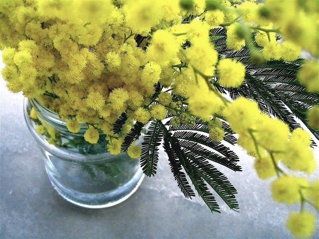 Flowers bunch yellow, nature landscapes.