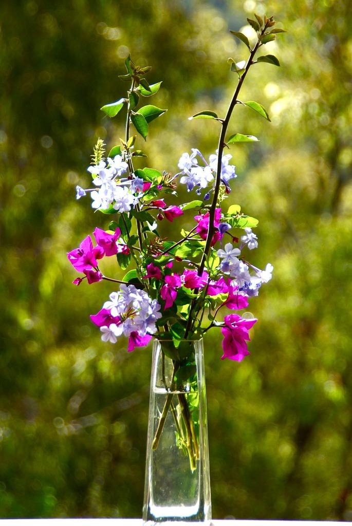 Flowers closeup petal, nature landscapes.