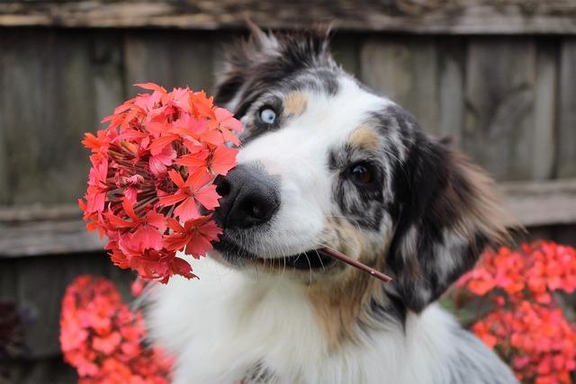 Flowers dog shepherd, animals.