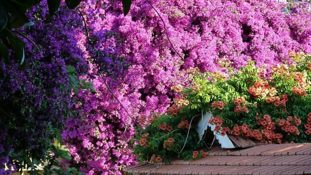 Flowers flanzen purple.