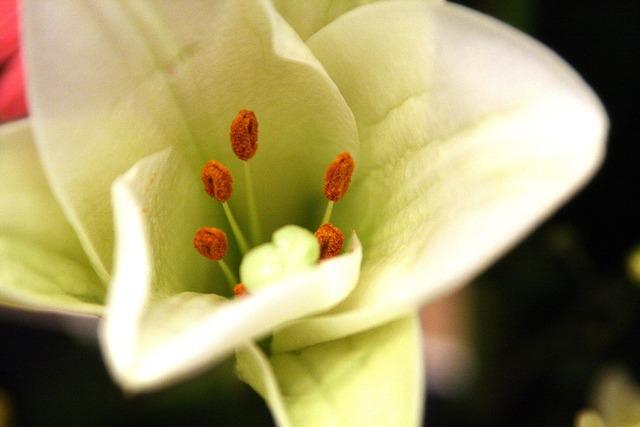 Flowers flower horn white flower.